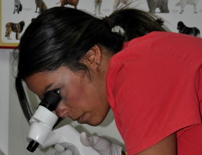 oftalmología canina