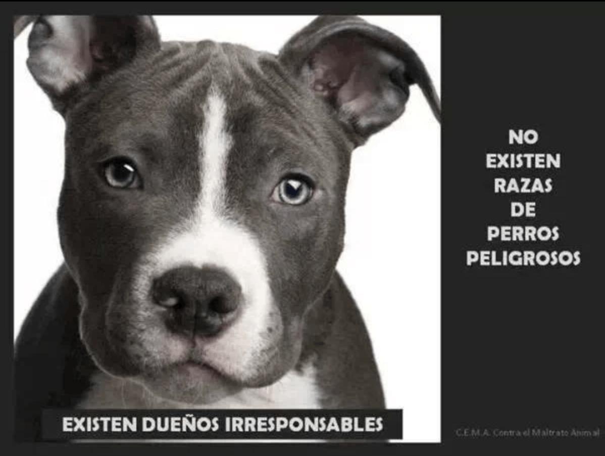 animales potencialmente peligrosos